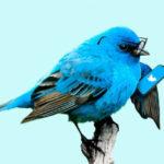 Twitterが続かない原因と継続するコツ【Twitter初心者】